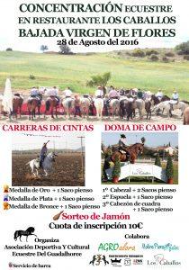concentración ecuestre caballos-2016